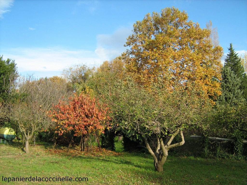 potager-automne