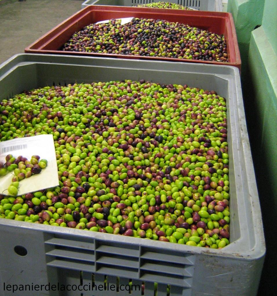 olives-Moulin-de-Villevieille