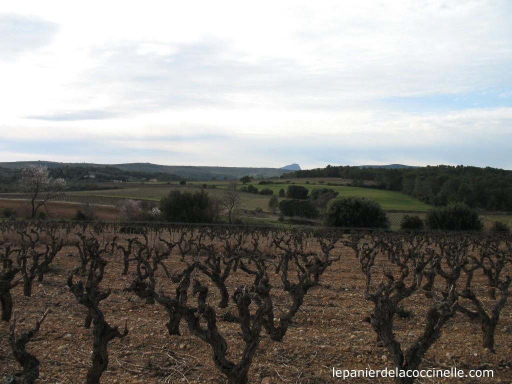 Château-Montel-vigne-Castanea