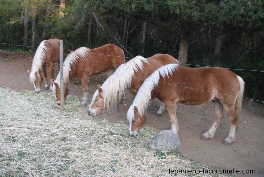 Domaine-Saint-Jean-de-l'Arbousier-chevaux