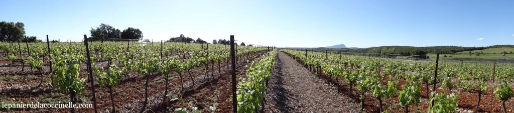 Chai-d'Émilien-vigne-printemps-Pic-Saint-Loup