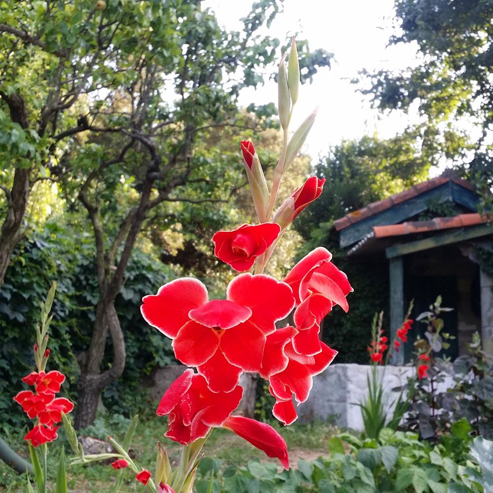 Couleurs et saveurs au jardin potager 2016 mademoiselle for Au jardin potager