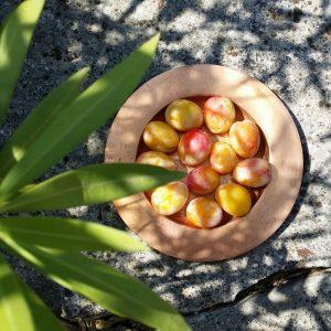 prunes-jardin-potager-bio