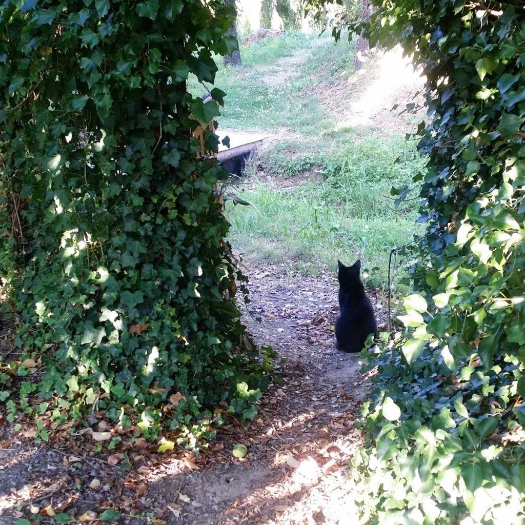 Réseaux sociaux et slow life. Chat noir dans mon jardin potager bio à la campagne. Mademoiselle Coccinelle, blog green
